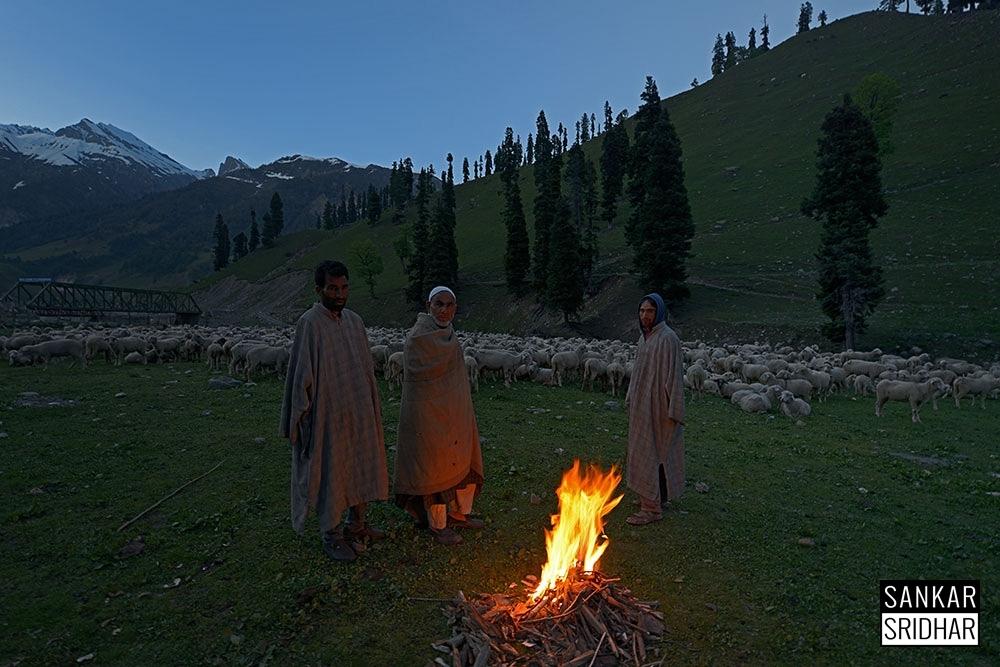 Жизнь кашмирского кочевого народа бакарвалы