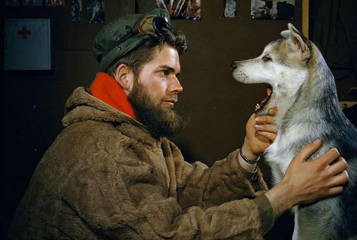 Мужчина осматривает зубы 10-месячного щенка аляскинского маламута, Южный полюс, 1957 год.