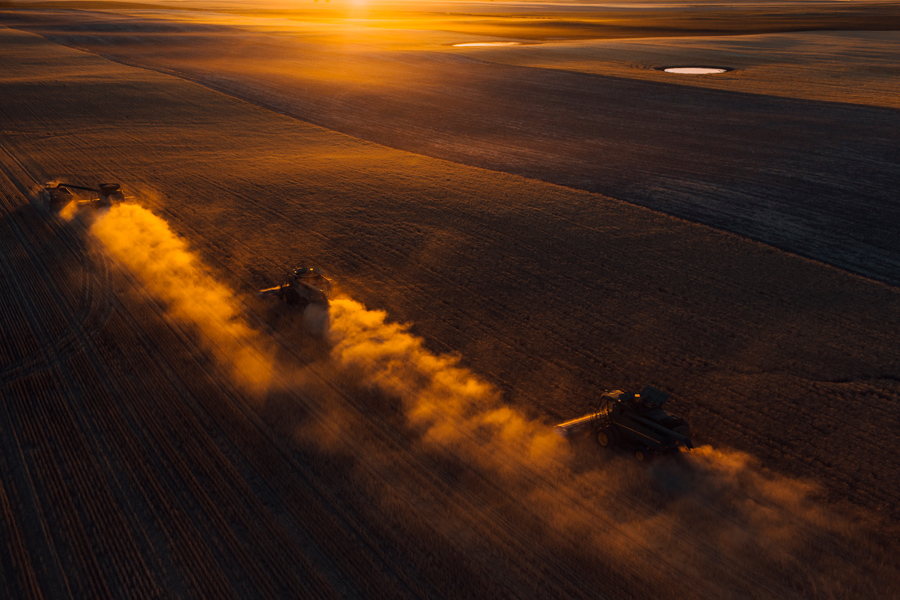 Combines thrash and toil kicking up dust and spitting out chaff as the sun dips below the horizon.