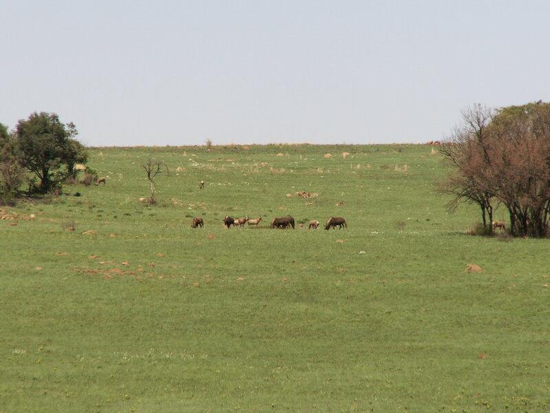 ЮАР, Антилопы