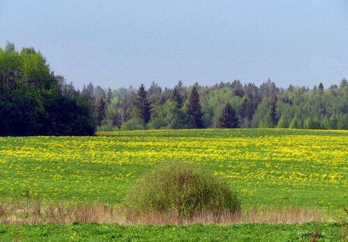 Пейзаж с желтыми цветами