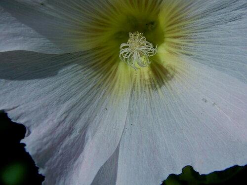 Цветок в цветке