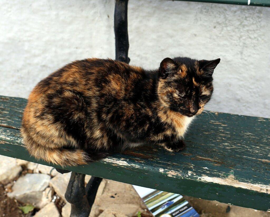 Фару. Январские коты в Сидад Велья