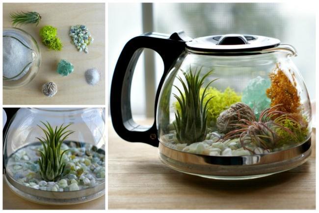 1. Обычный стеклянный чайник можно превратить ввосхитительный маленький террариум.