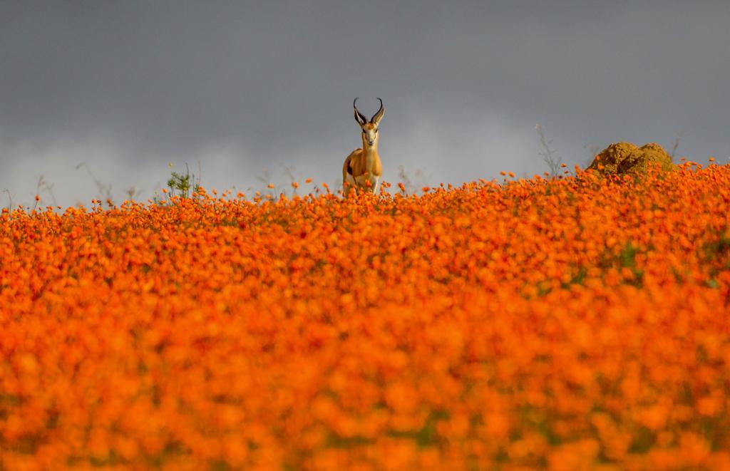 10 удивительно красочных мест планеты (28 фото)