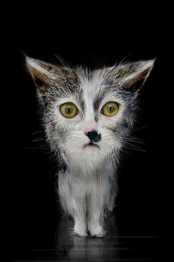 Животные - Фотограф Werner Dreblow