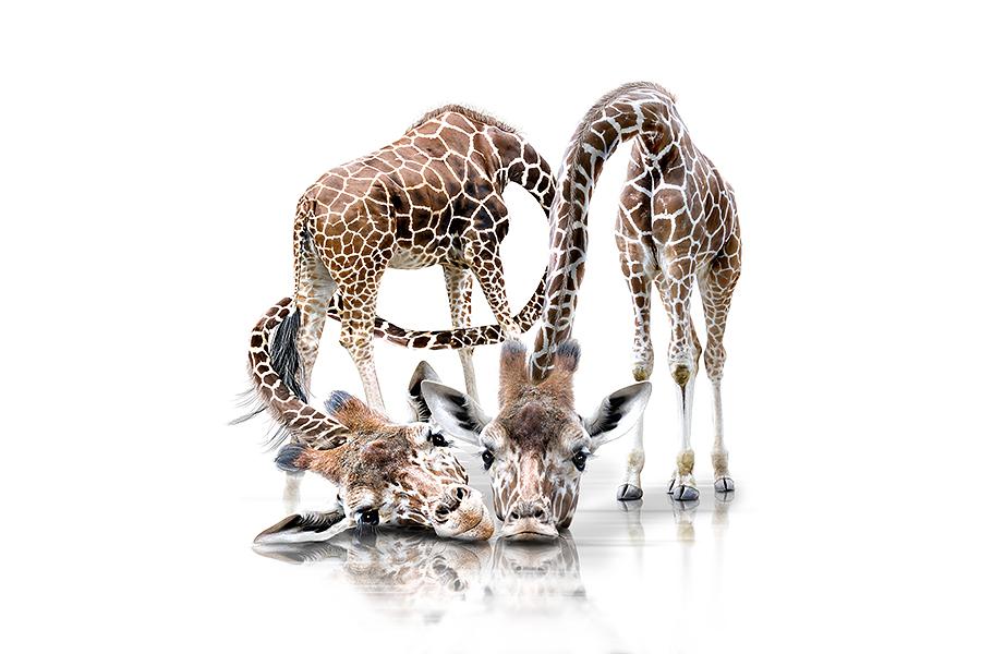 Немецкий фотограф Werner Dreblow фотографирует животных создавая потрясающие фотопортреты животных.