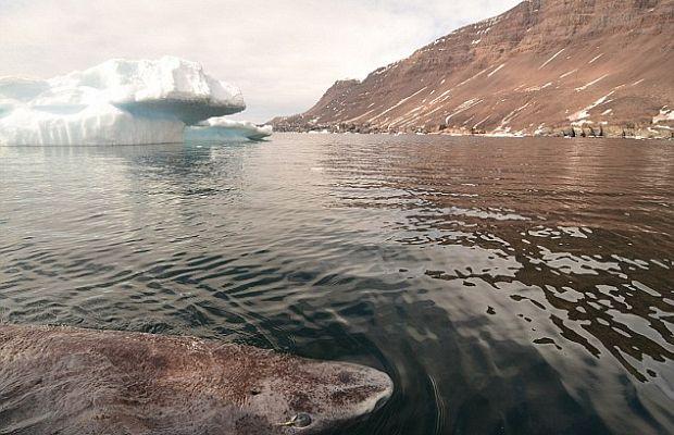 Непонятное открытие: ученые отыскали животное, способное прожить 500 лет