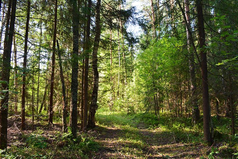 лес 2016 3.jpg