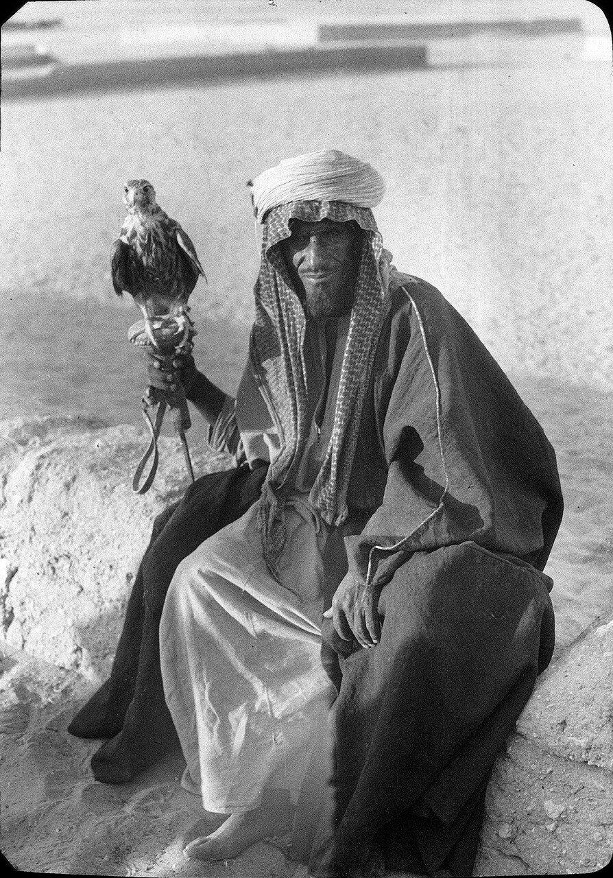 Саудовская Аравия. Шейх Наджира с молодым ястребом