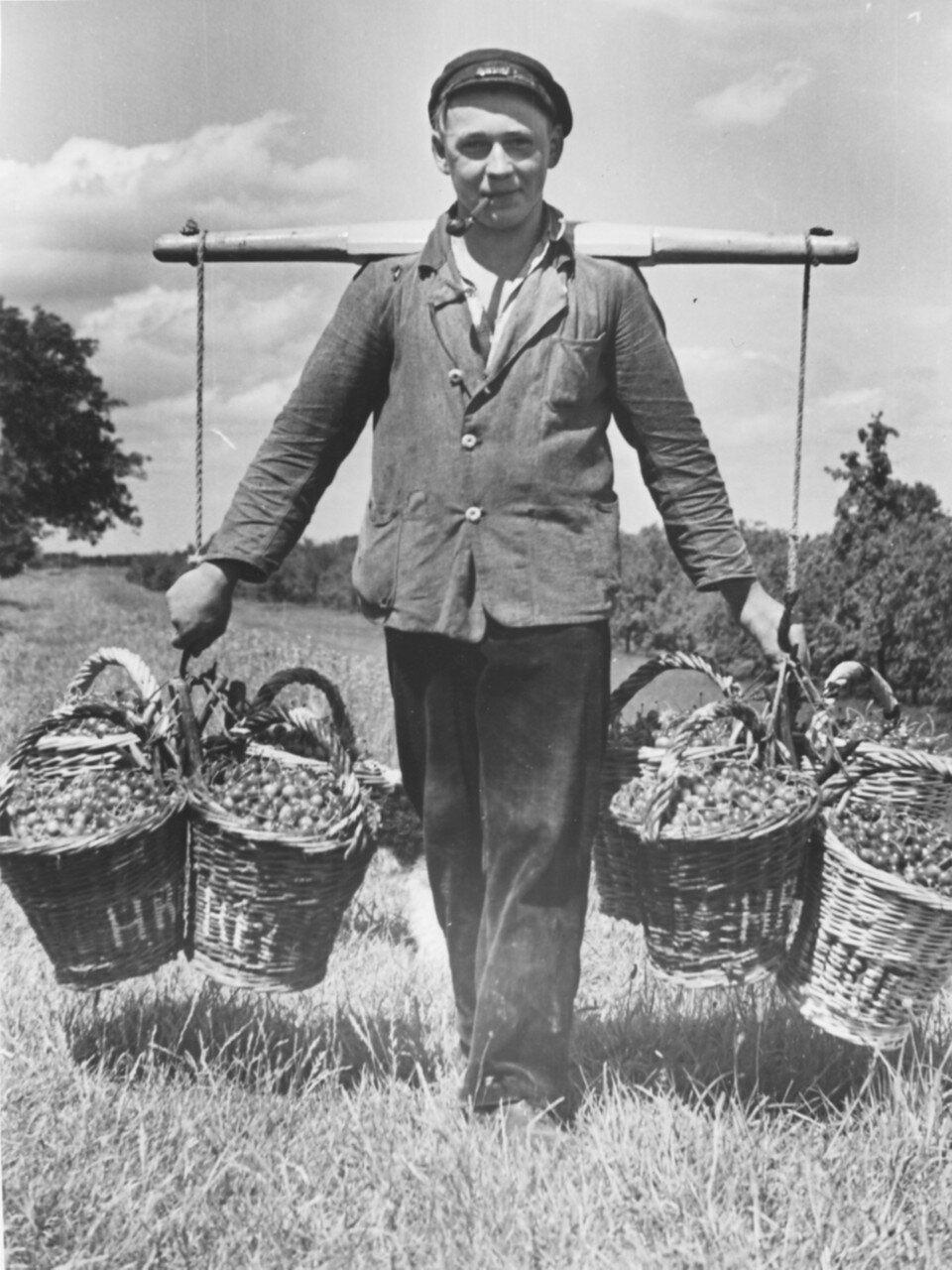 Гамбург. Сбор вишни. Фермер с корзинами, наполненными вишнями