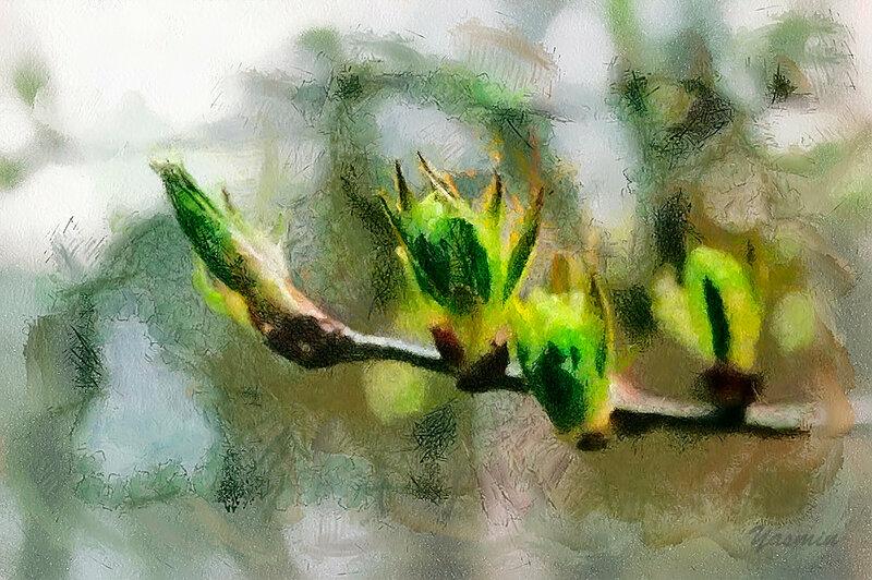 IMG_1250_DAP_Watercolor.jpg