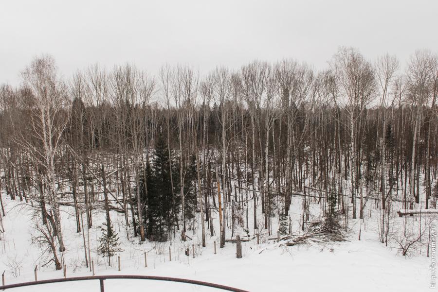 много поваленных деревьев в лесу