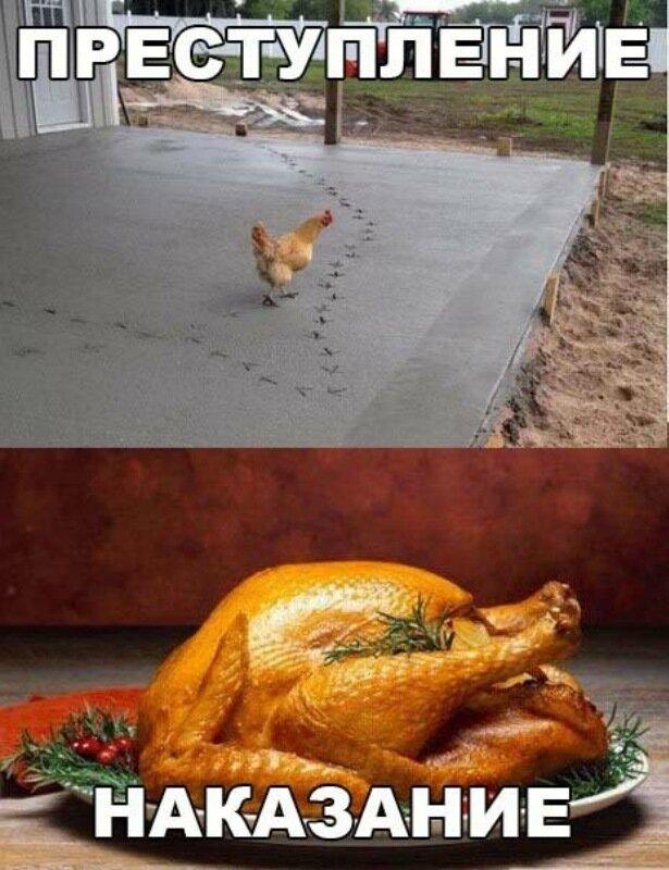 Прикольные-картинки-курица-цемент-песочница-2954880.jpeg