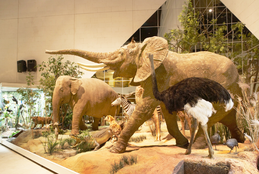 слон из Дарвиновского музея