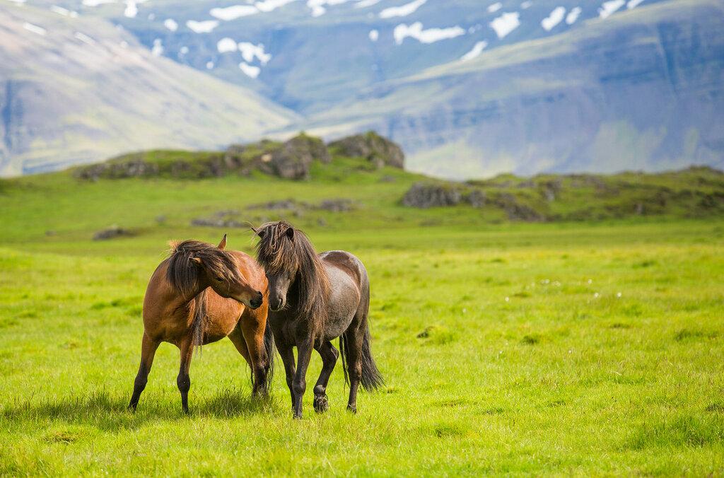 В исландских полях