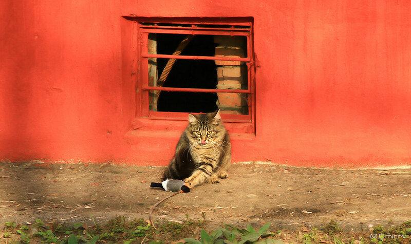 Кошки & Коты (2011)