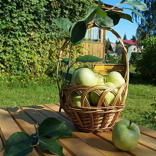 Сибирские яблочки