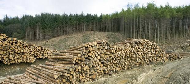 В Словакии нашли 6 тысяч кубов украденного украинского леса (видео)