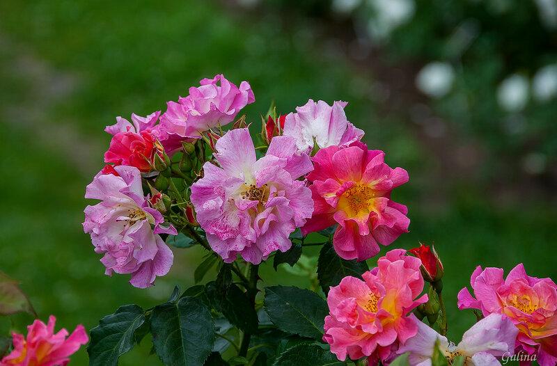 В цветах – душа, и жизнь, и вдохновенье,Они – побед и радости исток!