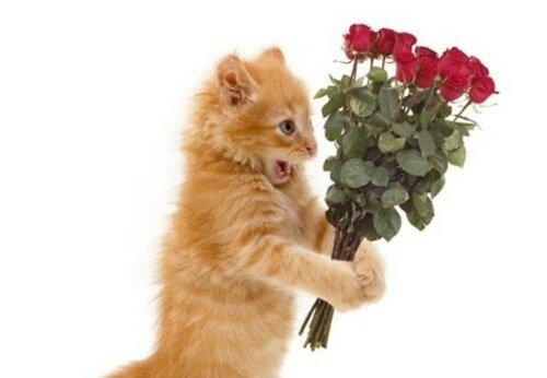 Поздравление от котенка