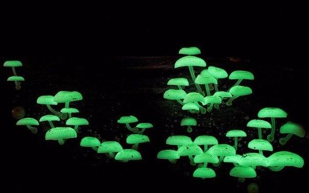 Самые экзотические грибы в мире