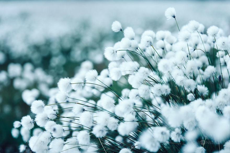 10 теплых снимков о том, как выглядит лето в холодной Финляндии