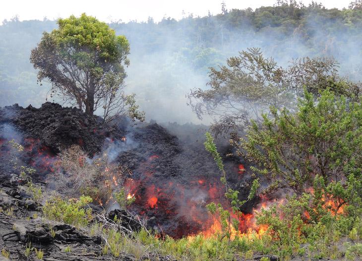 2. Поток лавы уничтожает на своем пути скраб и деревья, Гавайи, 28 июня 2016. (Фото HVO | USGS):