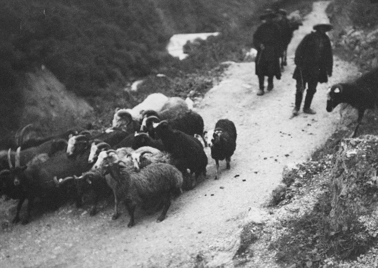 13 августа. Группа III. В ущелье реки Черек-Балкарский. Встреча с кабардинскими пастухами