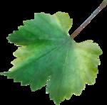 NLD Addon Leaf (2).png