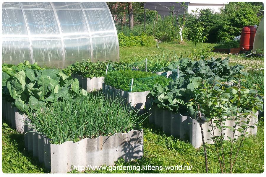 Июль - основные работы в саду и на огороде