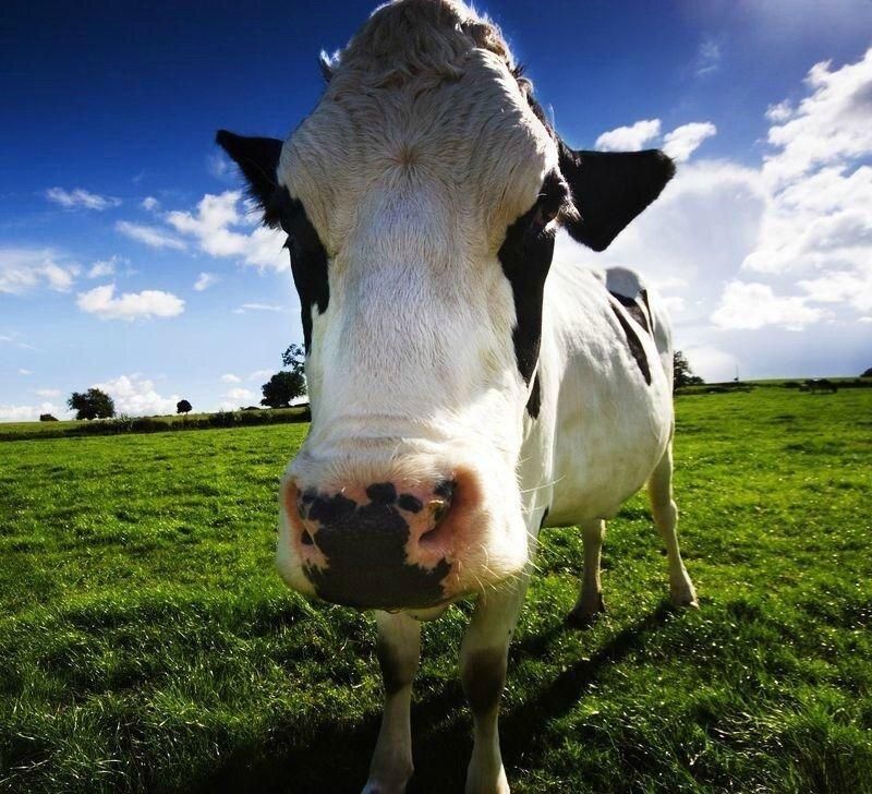 Интересные факты о животных в картинках