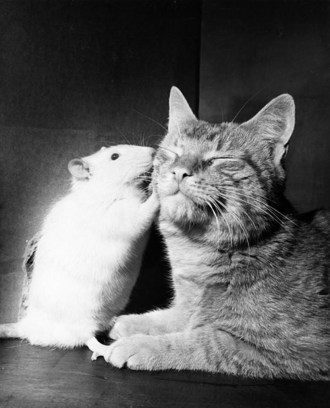 Если представители разных видов вместе вырастают, то они не испытывают враждебности друг к другу, а,