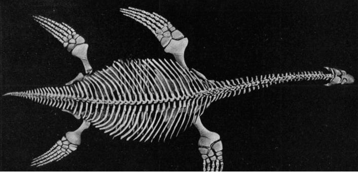 Именно такоенаучное названиеимеет Лох-несское чудовище. А получило оно его еще в 1972 году, к