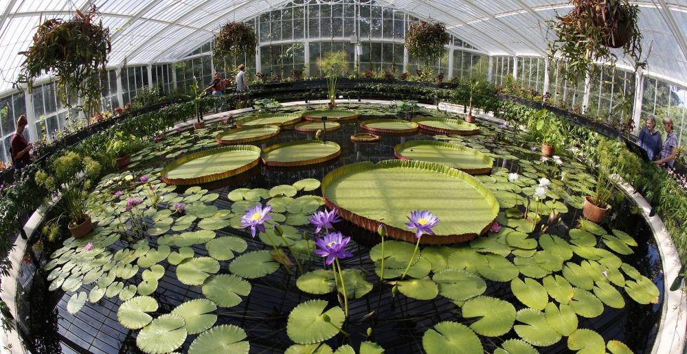 Тропический пальмовый парк, штат Флорида, США