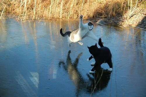 коты на озере.jpeg