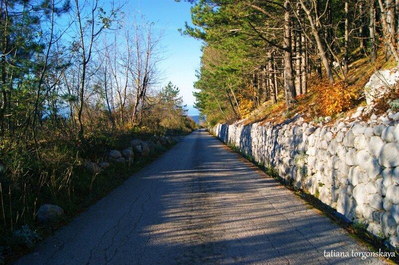 Дорога из Боричей