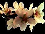 Flores_0130.png