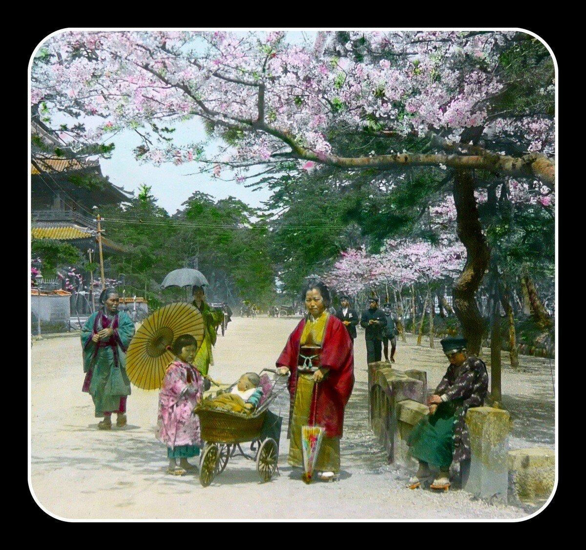 Токио. Цветение вишни
