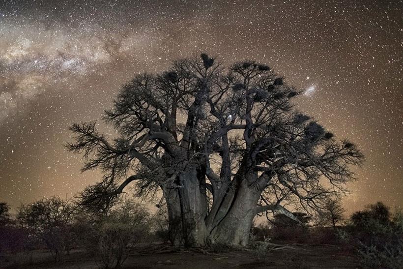 Фотограф Бет Мун: древние деревья Африки под звездным небом 0 136239 553eaaba orig