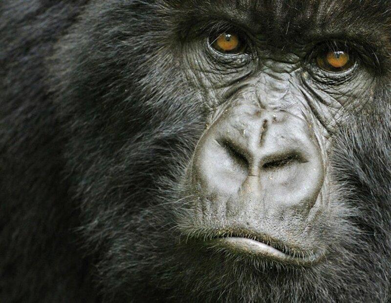 Быть мужиком: 14 альфа самцов в дикой природе