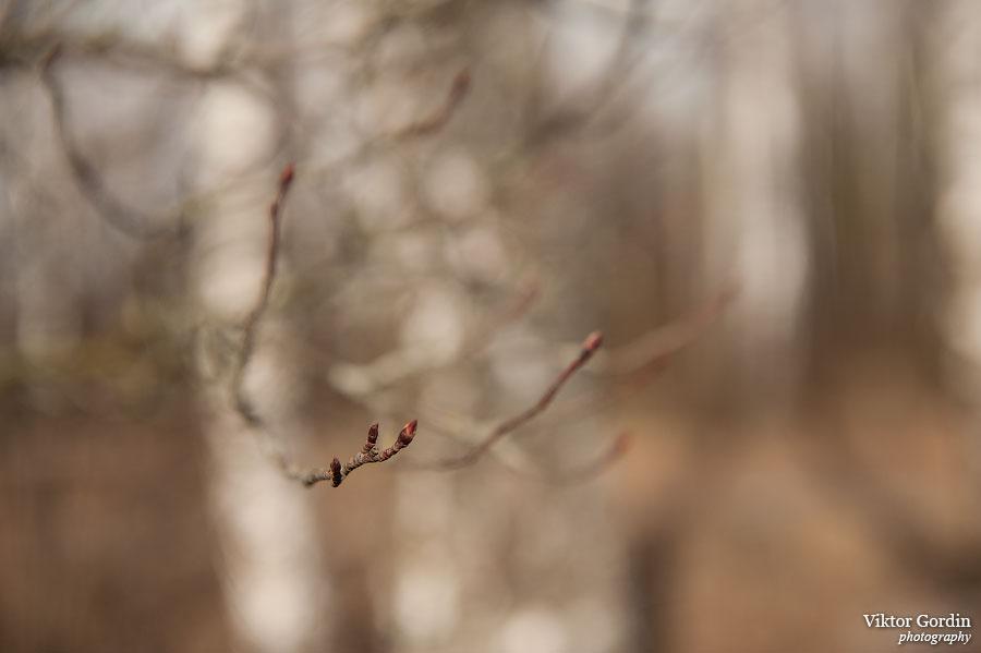 Весна на Истре