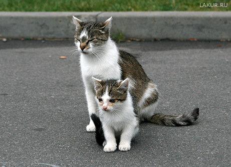 жизнь брест цитадель кошка