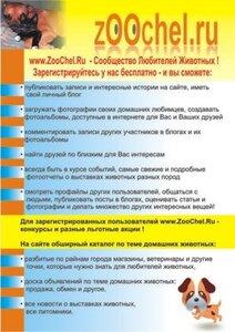 листовка для выставки собак Уральские Зори 2008, Челябинск