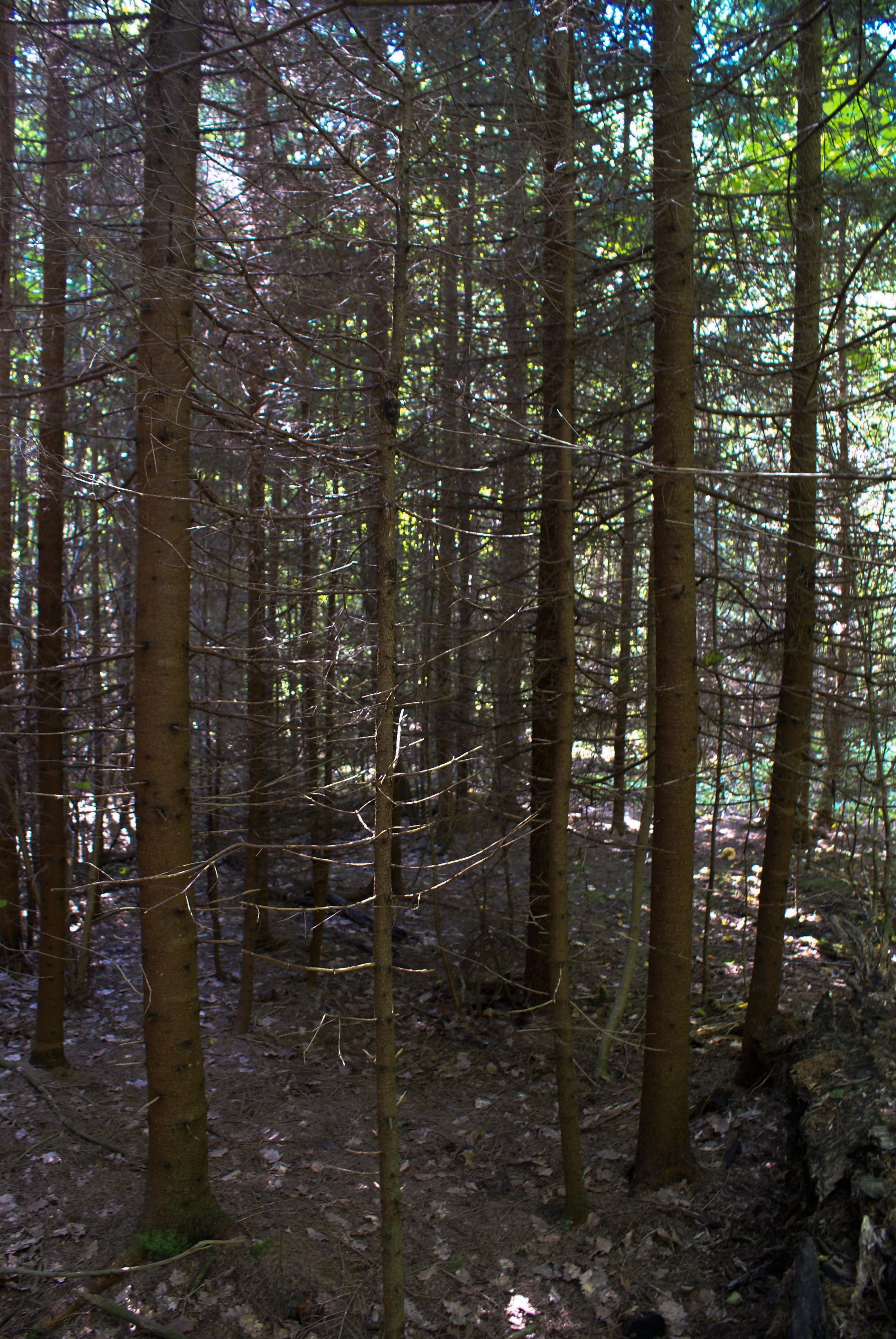 prinudili-v-lesu
