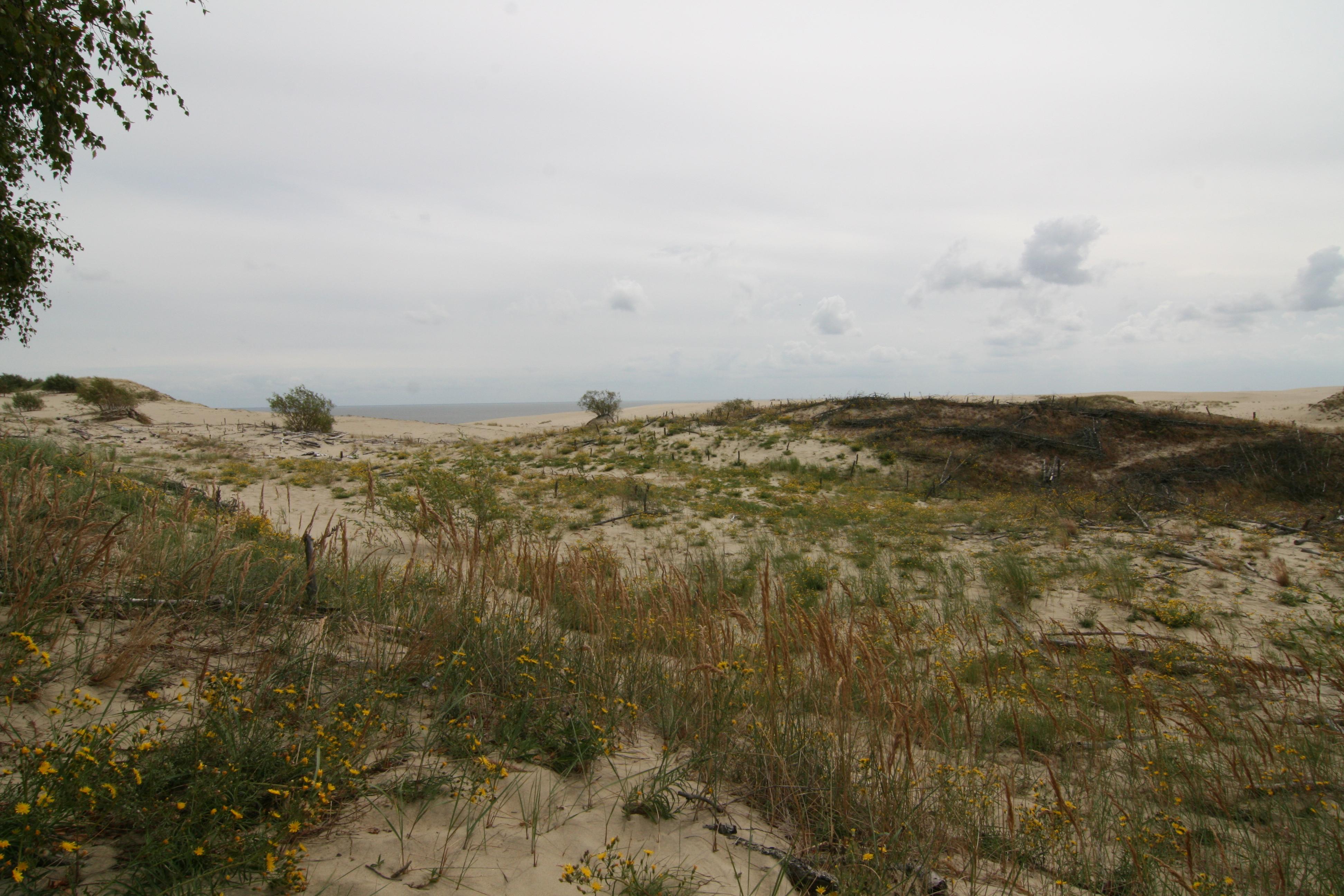 Дюны на Куршской косе