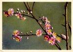 Персиковые цветы