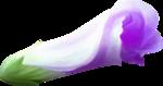 NLD Flower 5 b.png