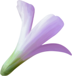NLD Flower 9 b.png