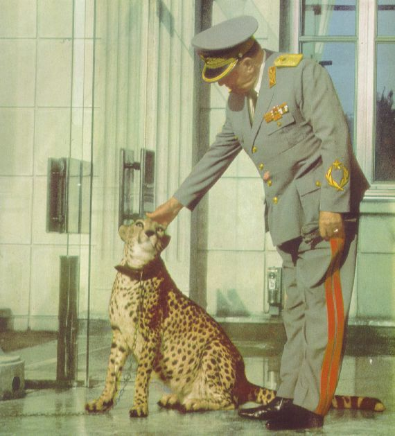 Josip Broz Tito, petting his Cheetah.jpg